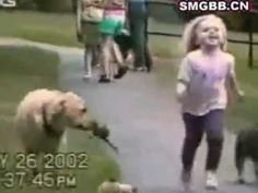 Funny Dogs Video Clips - Part 7