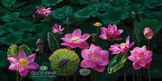 DQD by duongquocdinh on deviantART Lotus flower