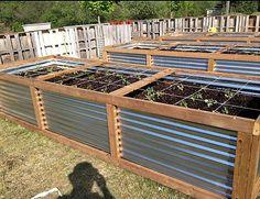 "12X4X30"" PT Galvanized Raised Garden Bed - Back Garden Life Metal Raised Garden Beds, Raised Garden Planters, Raised Garden Bed Plans, Garden Planter Boxes, Raised Beds, Potager Garden, Garden Fencing, Indoor Garden, Outdoor Gardens"