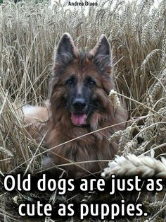 The German Shepherd                                                       …