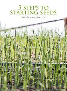 5 Steps to Starting Seeds - Herbal Academy 5 Steps To Starting Seeds - Growing Seedlings (via Herbal Academy of New England) Growing Seedlings, Growing Herbs, Farm Gardens, Outdoor Gardens, Gardening For Beginners, Gardening Tips, Garden Seeds, Organic Vegetables, Seed Starting