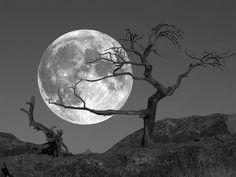 Luna en el desierto