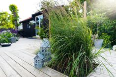 This is a great way to bring mosquito repellent plants right onto your deck