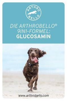 Als einer von neun Wirkstoffen, die in den Arthrobello®-Gelenkkapseln beinhaltet sind, ist Glucosamin am Aufbau und der Reparatur der Gelenkknorpel beteiligt und trägt zum Erhalt der Beweglichkeit Ihres Vierbeiners bei. Dogs, Animals, First Aid, Pet Dogs, Animales, Animaux, Doggies, Animal, Animais