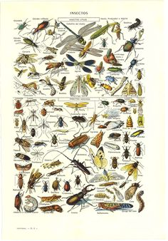 lithograph insects - Google Search