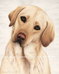 Katherine Plumer Fine Art: Drawings: Dogs: Shiloh