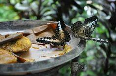 Batterfly sanctuary, Tagbilaran, Bohol