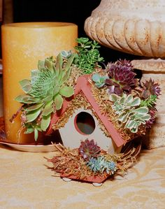 Succulent Rooftop Birdhouse designed by Cindy Davison from The Succulent Perch