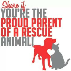 :-) All our pet family are from shelters..and we always will choose our babies from shelters...so many need good homes.