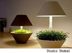 "The ""Lightpot"" Lamp/Planter by Studio Shubal"