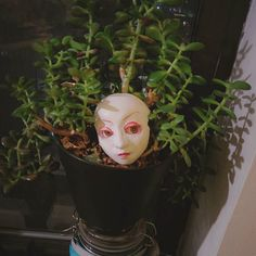 Be careful not to overt water your plants or else they'll give you disdainful looks.  #sideye #greenthumb #plants January 29 2016 at 07:42PM
