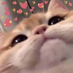 Cute Baby Cats, Cute Kittens, Cute Little Animals, Cute Funny Animals, Cute Cat Memes, Cute Love Memes, Funny Memes, Cartoon Memes, Funny Dogs