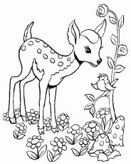the 13 best deer coloring pages images on pinterest deer coloring