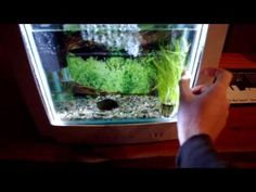 Turn old computer monitor into a fish tank.