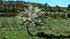 015-Paesaggi dell'interno della Sardegna - Meilogu