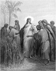 """THE DISCIPLES PICK GRAIN ON THE SABBATH He was going on the Sabbath day through the grain fields, and his disciples began, as they went, to pluck the ears of grain. The Pharisees said to him, """"Behold, why do they do that which is not lawful on the Sabbath day? """"MARK 2:23-24"""