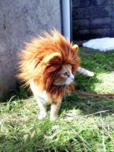 ...if Jsay ever really makes me get a cat.  I might do this to it.  :)