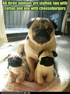 Takes a minute to realize which one is the live one. LOL. So cute!