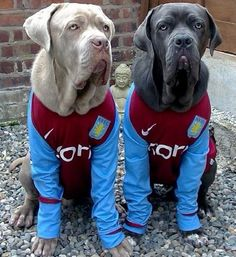 Ripley and Brock are barking mad about Villa! #AVFC