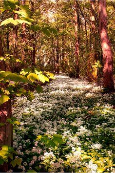 lunar-amethyst:  ❂ॐ☮Hippie|Spiritual|Nature blog☮ॐ❂  Fields of flowers
