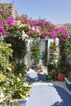 Flowery courtyard - Poros, Greece... a lovely place I once visited years ago by chance.