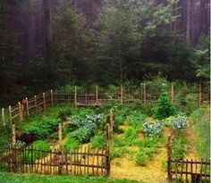 Love this primitive fence!