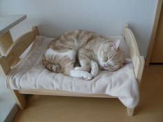 Catbed4