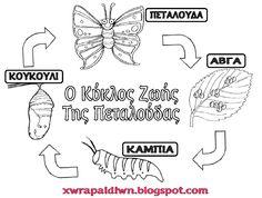 Αποτέλεσμα εικόνας για η πεταλουδα στο νηπιαγωγειο My Children, Kids, Preschool Education, Butterfly Crafts, Life Cycles, Spring Crafts, School Projects, Easter Crafts, Coloring Pages