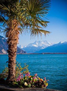 Lac Léman from the quay walk, Montreux, Switzerland. Places To Travel, Places To See, The Places Youll Go, Dream Vacations, Vacation Spots, Places Around The World, Around The Worlds, Beautiful World, Beautiful Places