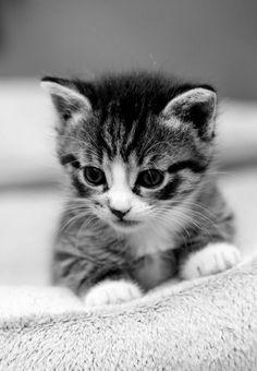 eee! So cute!
