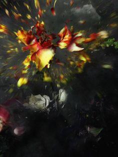 """Ori Gersht.  """"Exploding Flowers."""""""