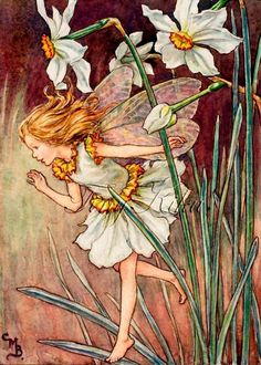 NARCISSUS FAIRY, Vintage - Cicely Mary Barker.   Art Print, Fabric Block, Iron On Heat Transfer or W