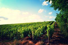 9 mentions J'aime, 2 commentaires - @sapo_vadrouille sur Instagram: «#valleeduloir #valléeduloir #vigne #vignoble #jasnieres #jasnières #vin #wine #sarthe»