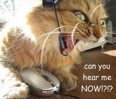 Can you hear me now ?