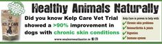 itchy dog with skin problems? Kelp Care has the answer. Sea Weed Recipes, Itchy Dog, Marine Environment, Natural Supplements, Skin Problems, Seaweed, Immune System, Did You Know, Remedies