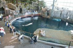Audubon Aquarium New Orleans