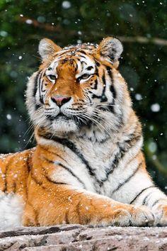 Wow!!!!! How beautiful he is!!!