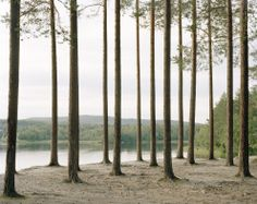 Landscape 4 - Felix Odell