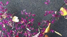 Wind, water and flower petals