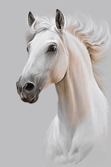 Horse Drawings, Animal Drawings, Art Drawings, Horse Head Drawing, Drawing Animals, Graphite Drawings, Pencil Drawings, Painted Horses, Cross Paintings