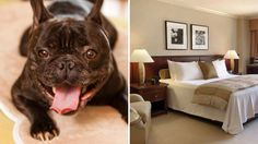 Best Pet Friendly Hotels In New York City