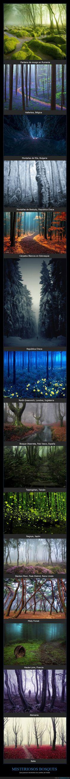 Misteriosos bosques que te dan ganas de viajar - Que parecen escenarios de cuentos de hadas
