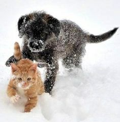 26 Best Puppy Kitten Love Images Dog Cat Dogs Pets