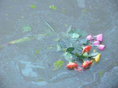 Roses in Water