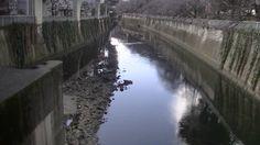 #japan#japon#travel#park#river