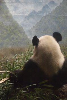 Panda guru view ; )  (via V U Λ S ♥ 21550135460)