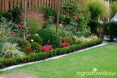 Ogród dla roślin o mocnych nerwach - strona 492 - Forum ogrodnicze - Ogrodowisko