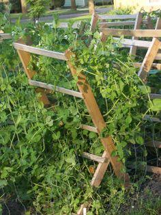 Tomato Cradles   Vegetable and Vine Plant Supports   Barnesville, MN   Fargo, ND