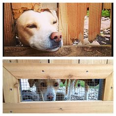 The Happy Homebodies: DIY Fence Windows for Dogs: Tutorial.  We really need this for our puppies and to fix the holes in the fence.  Spring Project