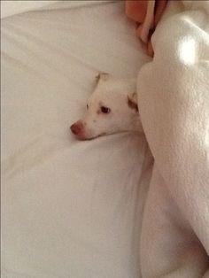 Η Ρόζα έτοιμη για ύπνο